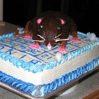 Rat On A Bingo Card Birthday Cake This is the strangest request yet I have gotten ofr a cake order! A Rat on a bingo card....one of those inside jokes! LOL