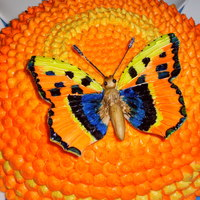 Butterfly Cake August 2010