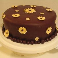Chocolate Daisy Cake  Chocolate cake with mocha chocolate buttercream on the inside and chocolate mmf on the outside. Daisies are ivory(as per wedding colours)...