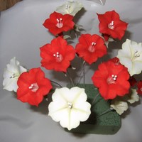 Red & White Petunias