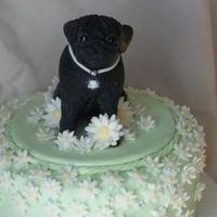 Milly The Pug Fondant with tylose added.