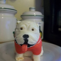 Bulldog With Cellulite only about a 1/3 done with this