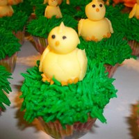Mini Chick Cupcakes Buttercream frosting for the grass, and the baby chicks were molded from modeling chocolate.