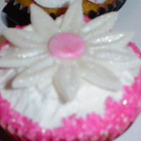 Daisy With Hot Pink Sugar Crystals