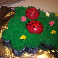 Cupcake Cake With Lady Bug Mini Cakes lady bug cupcake cake