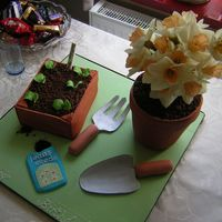 Gardening Birthday Cake For Great Grandma all edible except the flowers which were real daffodils! chocolate cake flowerpot covered in fondant and choc seed tray with fondant '...