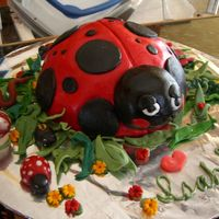 Cimg0664.jpg I made two of these lady bug cakes for my twin granddaughters who are in love with bugs. I surrounded the cake with all sorts of...