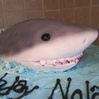 3D Shark Cake double layer 1/2 sheet cake, frosted, with RKT shark covered in fondant and airbrushed