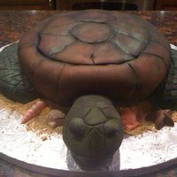 Sea Turtle This is a yellow cake with buttercream. Head, flippers, tail and feet are made with RKTs and double covered in fondant to allow the grooves...