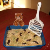 "Kitty Litter I used half a marble cake and half a spice cake. Peanut butter creme cookies for the litter with a little green food color. The ""poop&..."