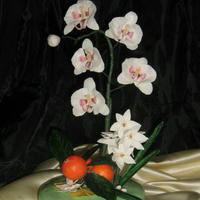 Moth Orchids Trying to master the moth orchids. Decided to throw in some oranges too :) ...