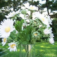 Old Fashioned Daisies