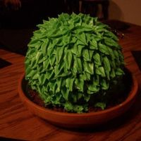 Cactus/ Plant Cake This is the second cake I have ever made. It basic white cake with buttercream frosting. I used a flower pot I bought from Michaels and...