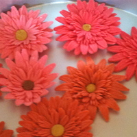 My Gerbera Daisies Fondant and gumpaste gerbera daisies I made for the top of a wedding cake. Used Duff's red fondant and white gumpaste for the pinker...