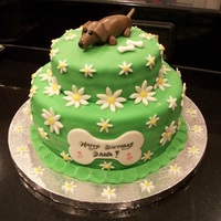 Green Daisy Fondant W/ Choc Mmf Dachsund red velvet bottom layer, chocolate top layer, choc mmf weenie dog, vanilla mmf flowers and green overlay. this is only my 2nd fondant...