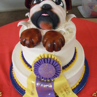 Bulldog 2 tier, with RKT bulldog head, covered in fondant, gumpaste best in show ribbon.