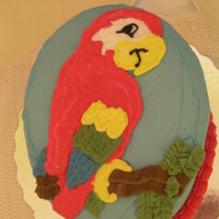 Parrot Cake chocolate cake, chocolate filling, hand drawn parrotmade for my sons 6th birthday
