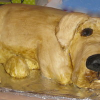 3D Labrador Dog Cake   All chocolate sponge cake covered in ivory royal icing