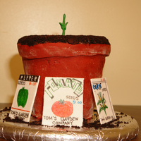 Tomato Seedling In Terracotta Pot