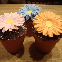 Daisy Cupcakes Chocolate cupcakes in silicone mold that looks like a flower pot (purchased at Michaels), Iced in chocolate with cookie & cream...