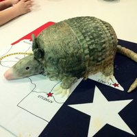 "Armadillo Cake This was an armadillo cake I made for a ""Welcome to Texas"" party we had for our friends from New Zealand and Russia."