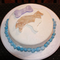 Shetland Sheepdog Fondant Cake My first attempt at a fondant cake. The inspiraton: My male shetland sheepdog, Smudge!