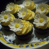 Chocolate Cupcakes With Lemon Buttercream, With White Daisies!