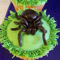 Tarantula My now 6 yr old HAD to have a tarantula party-which included a tarantula cake (cupcakes). He LOOOVVVVEEESSSS bugs -all of them. I Hate...