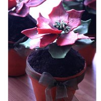 Poinsettias In Pots gum paste poinsettia flowers in a cake pots with cookie dirt