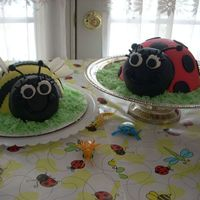 Birthday Bug Cakes I made these cakes for my daughters 2nd birthday. Her party theme inspiration came from the cute bug wrapping paper covering the table. I...