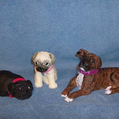 Pugs And Boxer