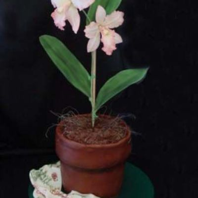 Cattleya Orchid Pot on Cake Central