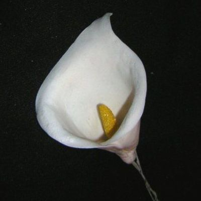 Calla Lily on Cake Central