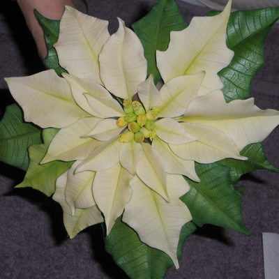 Gum Paste Ivory Poinsettia on Cake Central