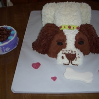 Springer Spaniel Springer Spaniel cake I made for my aunt and cousin who have a spaniel named Sadie. Sadie was afraid of gnomes as a puppy so I also made a...