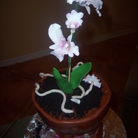 Orchid   Orchid on flower pot...all buttercream, flowers gmpaste/fondant.