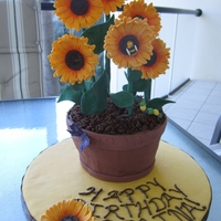 Sunflowers In Terracotta Pot Coffee-flavoured cake with chocolate ganache, covered in Satin Ice fondant. All decorations are fondant (as I had enough time to let them...