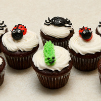 Bug Mini Cupcakes Chocolate mini cupcakes with buttercream icing and buttercream spiders, catterpillers, and lady bugs.