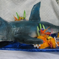 "Shark The shark is 40"" long from the jaw to the tip of the tail. It is covered in MF and airbrushed. It was done for a 11 year old's..."