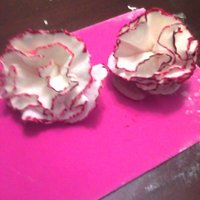 Carnations   I did it!! My first attemp at gumpaste carnations!! I used a tutorial from You tube.
