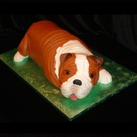 3-D Bulldog Grooms Cake This was made as a surprise for a NHL player who has a bulldog named Gus. It was done with buttercream except for the tail, nose, ears &amp...