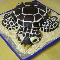 Sea Turtle Birthday Cake  Sea Turtle, buttercream icing with dark chocolate fondant plates, 10inch round on an 8 inch round, 6 inch round for head, 6inch round for...