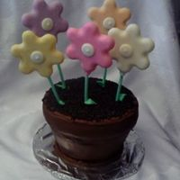 Flower Pot Flower pot cake with white chocolate flowers