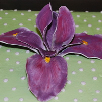 Iris I couldn't find a form on short notice so I bought a silk flower and tore it apart to use as a guide to make a gumpaste Iris. Ha The...