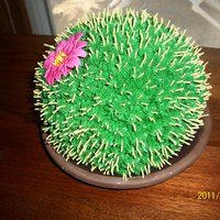 "Cactus Cake Round cactus made with sports ball royalicing flower gum paste spines. Chocolate cookies ""dirt"""