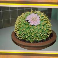 Cactus With Pink Flower   My daughter and I worked on this cake together.