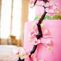 Cherry Blossom Cake Pink and Green Cake with Cherry Blossoms