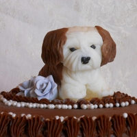 Puppy Birthday Cake   Chocolate fudge cake for my dad's birthday with a white chocolate candy clay puppy made to look like his shih tzu