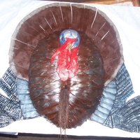 Mounted Wild Turkey Head is made from gumpaste and painted the beard is browned cornsilks covered in fondant and painted