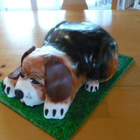 Airbrushed Beagle Dog Cake Started with 3 13X9 layers, and carved out the entire shape. Only the back paws were solid fondant. Added brown and black airbrush and...